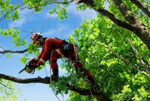 Tree Services Available in Manhattan & Bronx