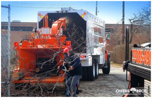 Emergency Tree Services